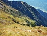Via Normale Cima Vignone - L'Alpe Vignone dalla cresta SW della Cima Vignone
