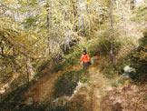 Via Normale Monte Storile - Via Normale da W - Nel bel bosco di Larice sopra le Baite Redasco.