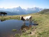 Via Normale Hochrast - Pausa Alta - Pozza d´alpeggio verso le Dolomiti di Sesto