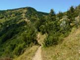 Via Normale Monte Alfeo - Il sentiero sul crinale