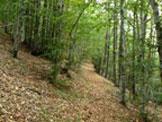 Via Normale Monte Alfeo - La traversata della foresta