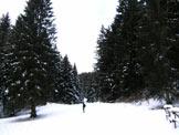 Via Normale Corna Lunga - Bosco di pini nei pressi di Malga Lunga