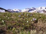 Via Normale Monte  Mondolè - contrasto verde bianco alla Colla Bauzano