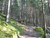Via Normale Monte Lupo/Wolfskofel - Il sentiero nel bosco