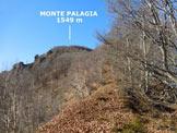 Via Normale Monte Palagia - All'inizio del boscoso costone E del Monte Palagia