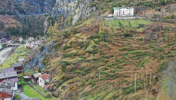 Alberi caduti a Caprile, Alto Agordino