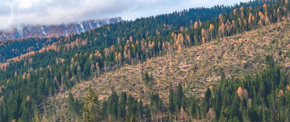 Alberi caduti nella Foresta di Paneveggio