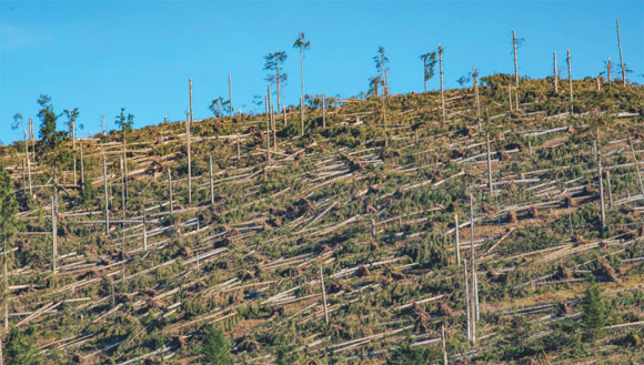 Schianti di alberi da vento