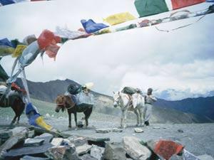 Ladakh, contemplazione del sogno - Tsering con i suoi cavalli