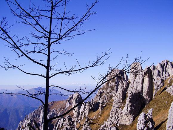 Alberi e rocce guardando verso ovest